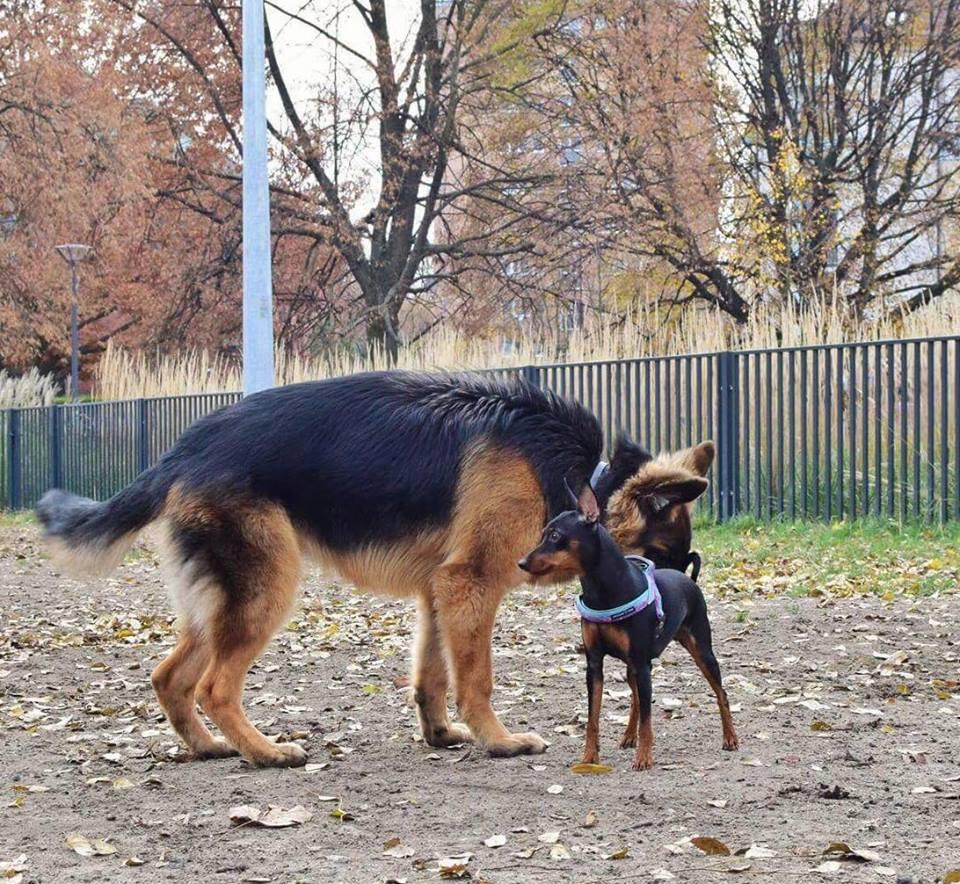 Park Józefa Polińskiego w Warszawie, psi wybieg