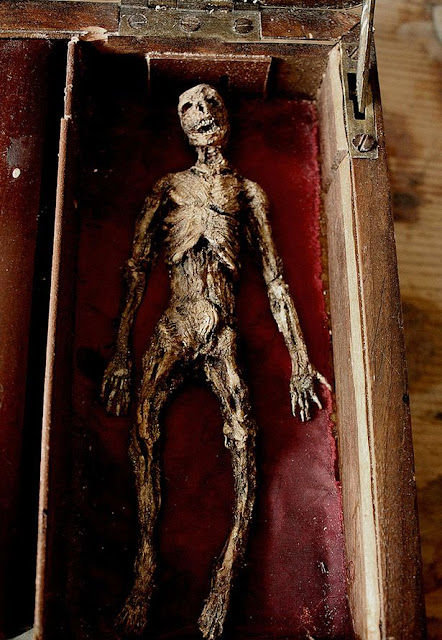This Mysterious Winged Tiny Human Skeleton Was Discovered In The Basement Of An Old House In London!