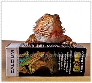 bearded dragon calcium