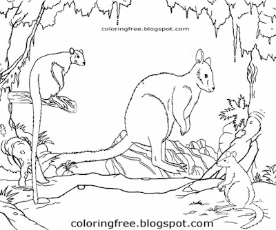 Tree kangaroo tiny marsupial Pademelon Rock Wallaby outback wildlife Australian animals colouring in