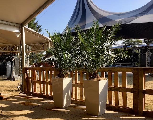 Planten huren voor aankleding evenement bedrijf kantoor beurs lounge vip-ruimte zwembad. Plantenverhuur prijzen op aanvraag. Actief in België Limburg vooral Vlaams-brabant Antwerpen Gent Brussel.