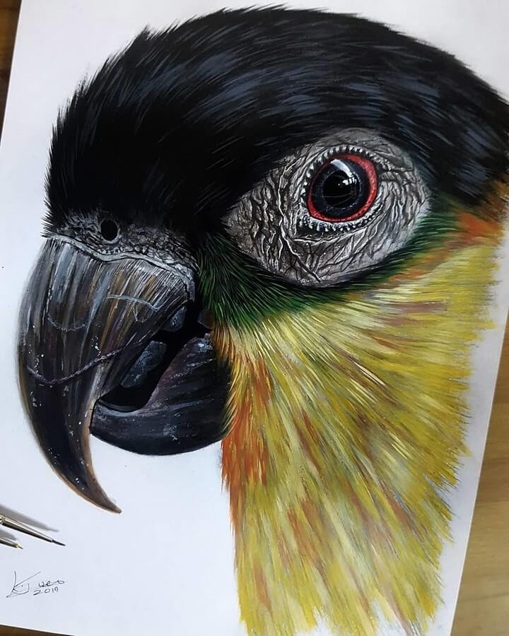 07-Black-Headed-Caique-Kyle-Duca-Animal-Paintings-www-designstack-co