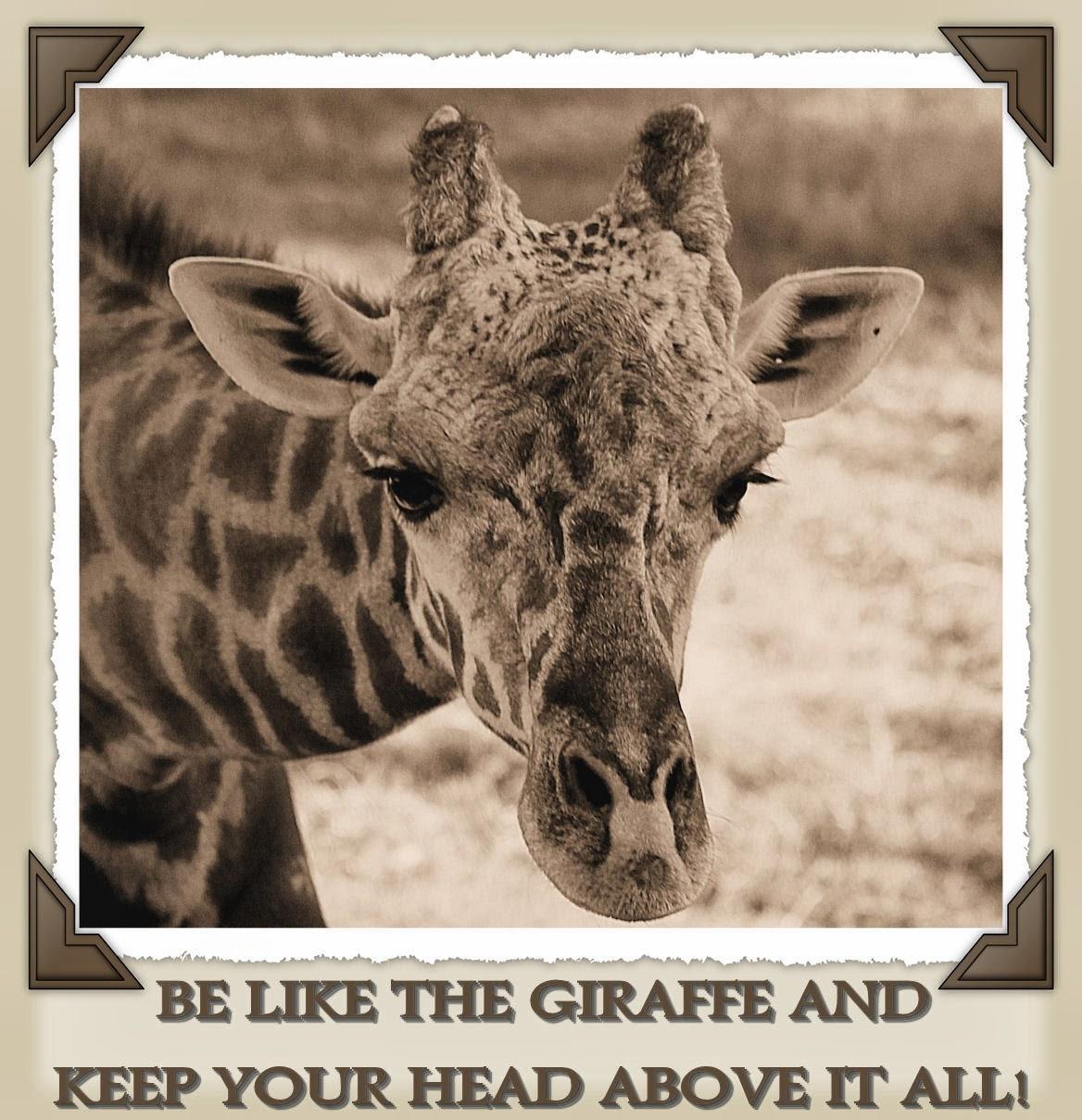 Giraffe Quotes Funny: Giraffe Love Quotes. QuotesGram