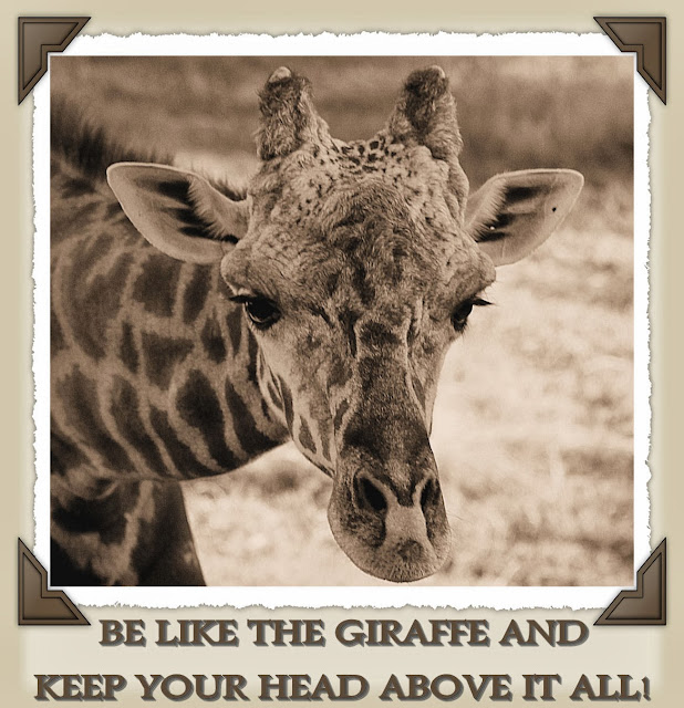 Giraffe Quotes: Giraffe Quotes And Sayings. QuotesGram