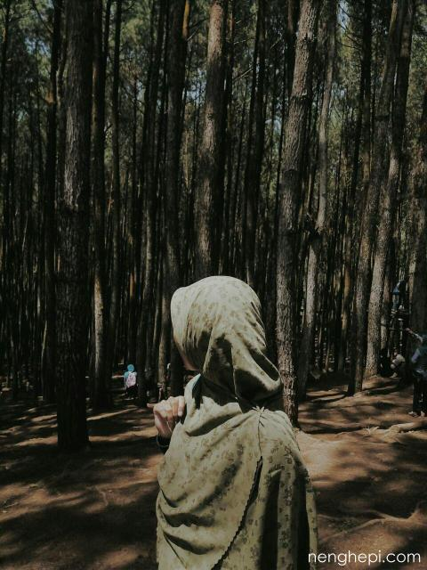 Hutan Pinus Imogiri, Jogja