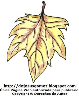 Foto de una hoja seca de otoño. Dibujo de la hoja en otoño hecho por Jesus Gómez