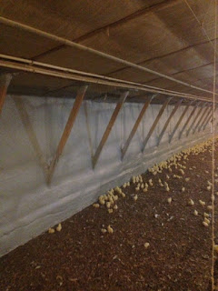 Spray foam in poultry house