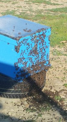 Ερώτηση μελισσοκόμου για ασθένεια μελισσιού Photos