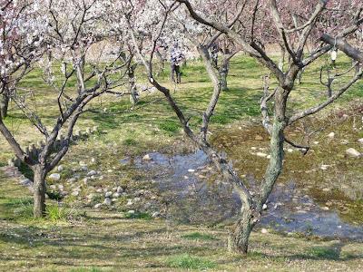 山田池公園 梅林の池
