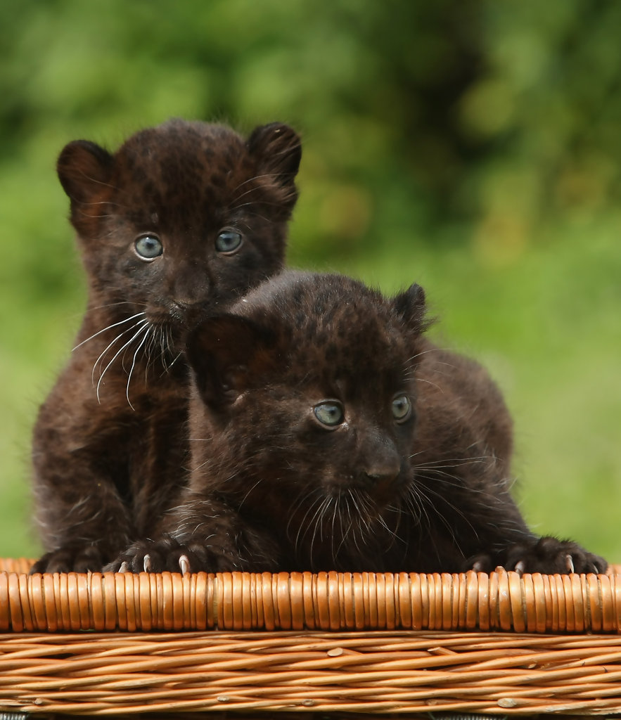 Cute Lion Cubs Hd Wallpapers My Dreams Cute Baby Animals Pictures Amp Images