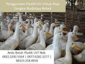 Penggunaan Plastik UV Untuk Atap Sangkar Budidaya Bebek