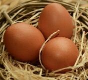 cara membedakan telur kualitas bagus