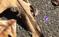 Purple plastic gem glinting on asphalt