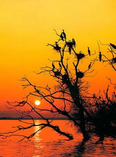 Pássaros em sol vermelho. A Grande Tribulação - EBD Genivaldo Tavares de Melo ube blogs uniao de blogueiros evangelicos