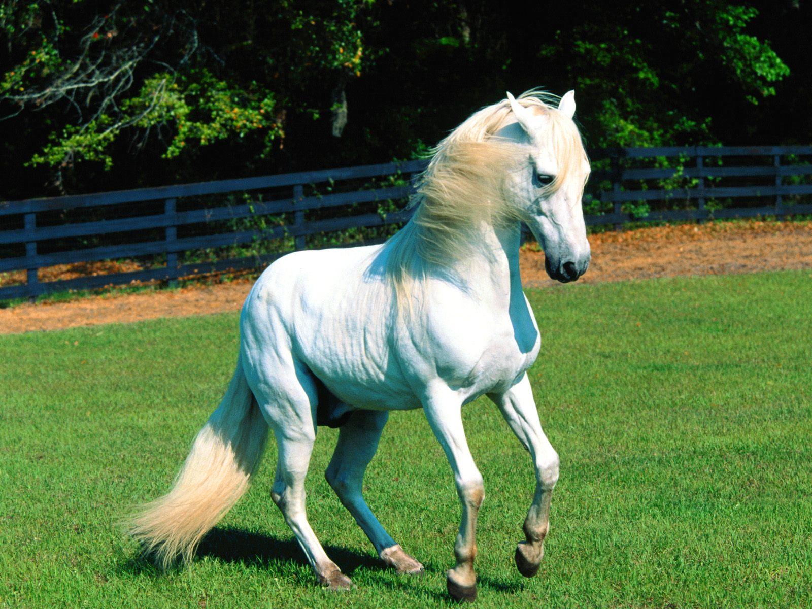 Good   Wallpaper Horse Flicka - MixoPlanet+%2819%29  Image_1285.jpg