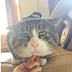 Treffen Sie Ah Fei, die mollige Katze mit dummem Gesicht wird Ihr Herz gewinnen