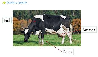 http://primerodecarlos.com/SEGUNDO_PRIMARIA/noviembre/Unidad_4/actividades/cono_unidad4/caracteristicas_mamiferos2.swf