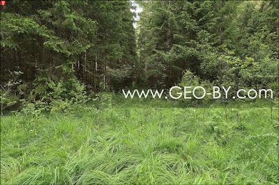 Налибокская пуща. Лесной перекресток