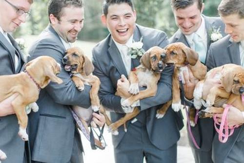 cachorrinhos%2Badotados%2Bapenas%2Btr%25C3%25AAs%2Bpalavras%2Bsim%2Beu%2Baceito%2B%25282%2529 - Shelter Puppies Are the Best 'Bouquets' for This Bridal Party - Photos Unlimited