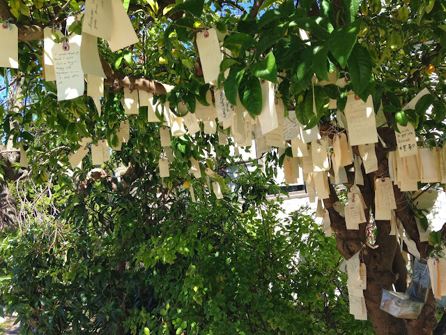 Little Hiccups The Wishing Tree