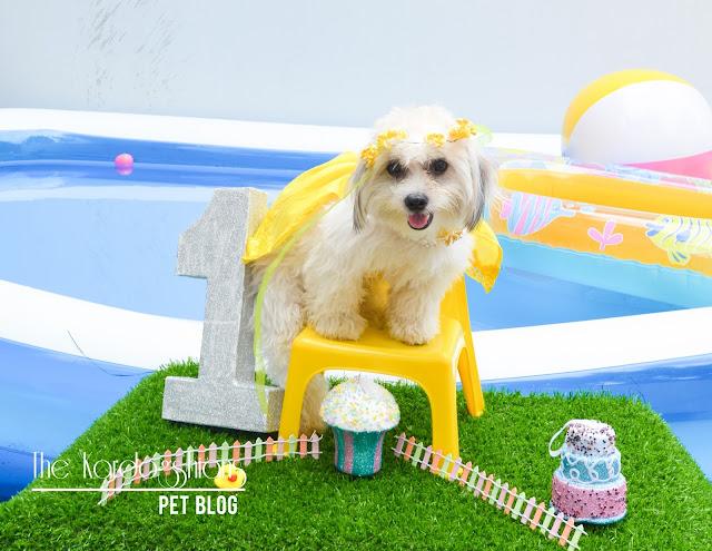 Harley Quinn 1st Pool Pawty