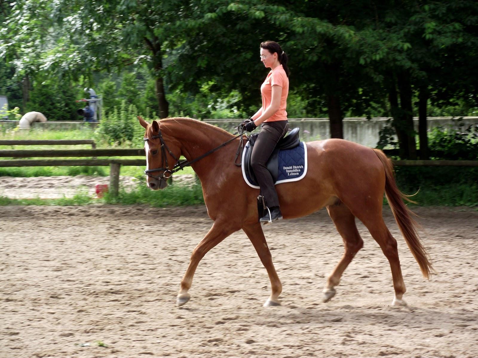Sie sucht ihn pferde