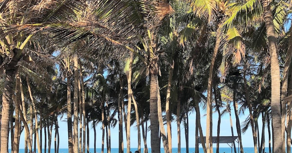 Saiba quais praias de Fortaleza estão próprias ao banho no feriadão do Ano  Novo a331fe90fa