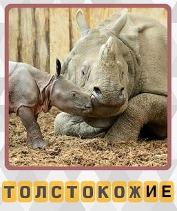 толстокожие носороги 3 уровень в игре 600 слов