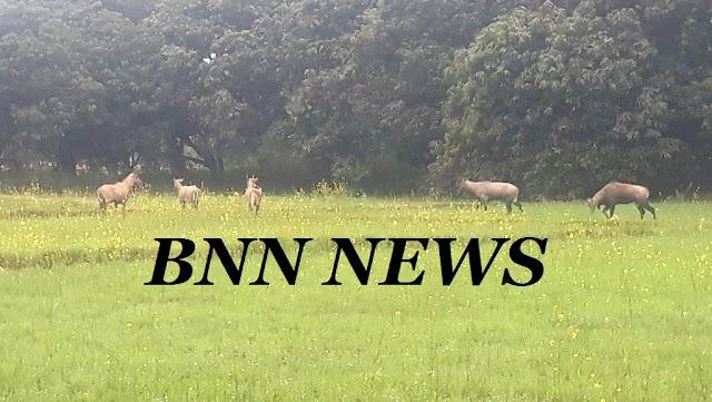 नीलगाय के उत्पात से किसानों पर टूट रही आफत