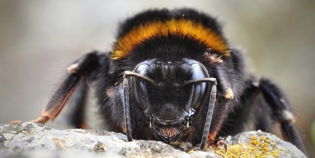 Animales y abejorros