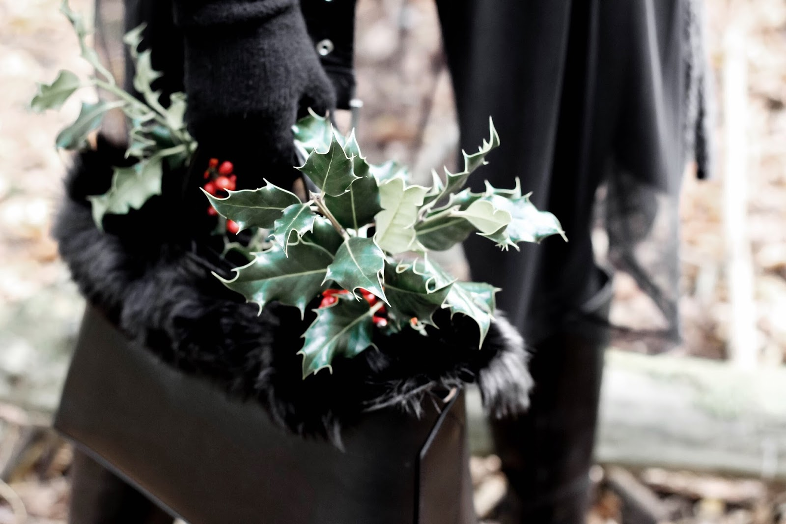 Collecting holly foliage for Christmas in Bag