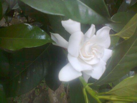 http://bundaberkebun.blogspot.com