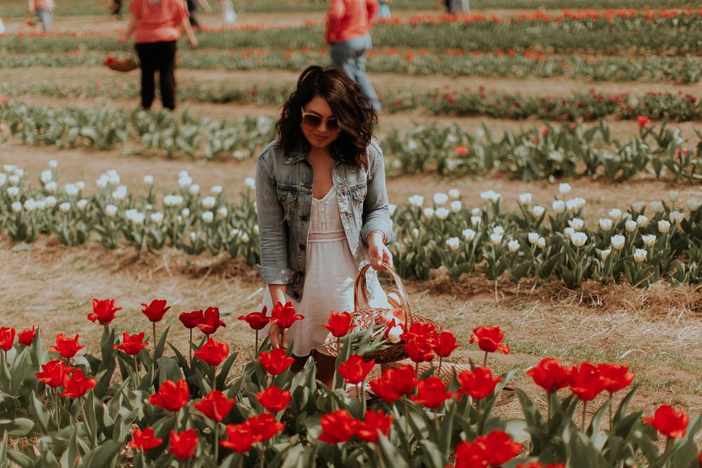 tulips picking nc, dewberry farm, nc blogger, nc lifestyle blogger, tulip farm nc