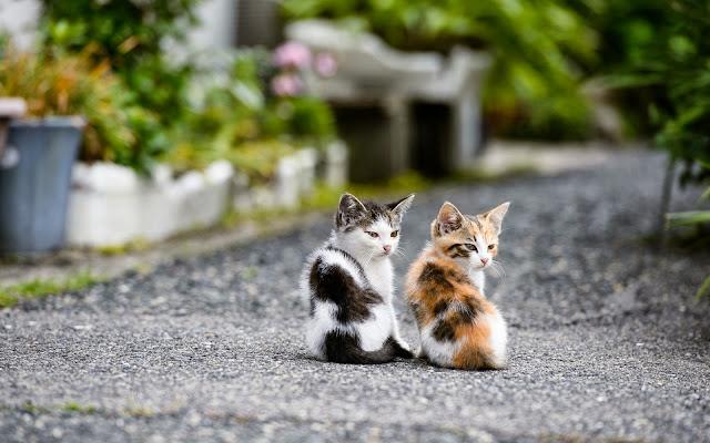 Twee jonge katjes op de weg