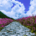 Valley of Flower National Park - The land of Fairies