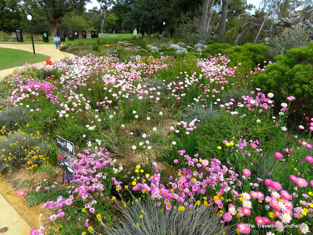 Kings Park wildflowers