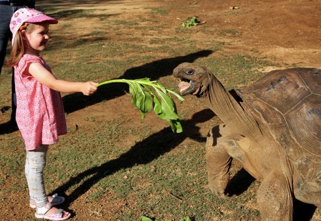 Helia disfrutando dandole lechuga a una Tortuga Gigante Aldabra