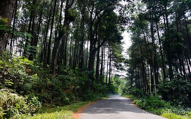 Jalan menuju Tlogopucang dari arah Kandangan