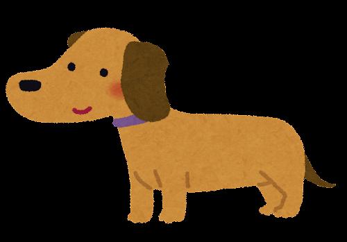 ミニチュア・ダックスフンドのイラスト(犬)