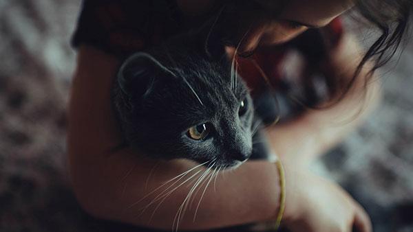 اجمل القطط البيضاء في العالم  اجمل القطط الصغيرة في العالم  اجمل قطط في العالم للبيع؟  اجمل قطة في العالم 2017  اجمل قطة في العالم 2018  اجمل قطة في الكون  ~خلفيات قطط كيوت  قطط مكتوب عليها  التنقل في الصفحة