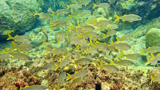 Snorkeling Princess Margaret Beach Ocean Fish Bequia St Vincent The Grenadines Caribbean