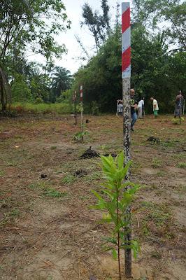 Area Tree Planting Borneo Jazz Festival 2016