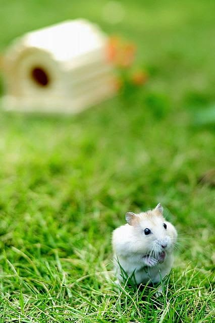 Cute and funny pictures of hamsters 2-3