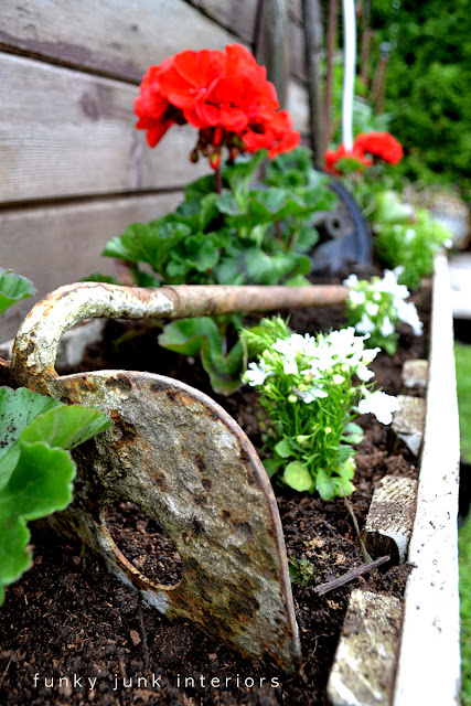 Rusty antique hoe in a red geranium flowerbed / funkyjunkinteriors.net