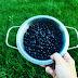 Domowe przepisy są najlepsze - ciasto kruche z jagodami i bezą