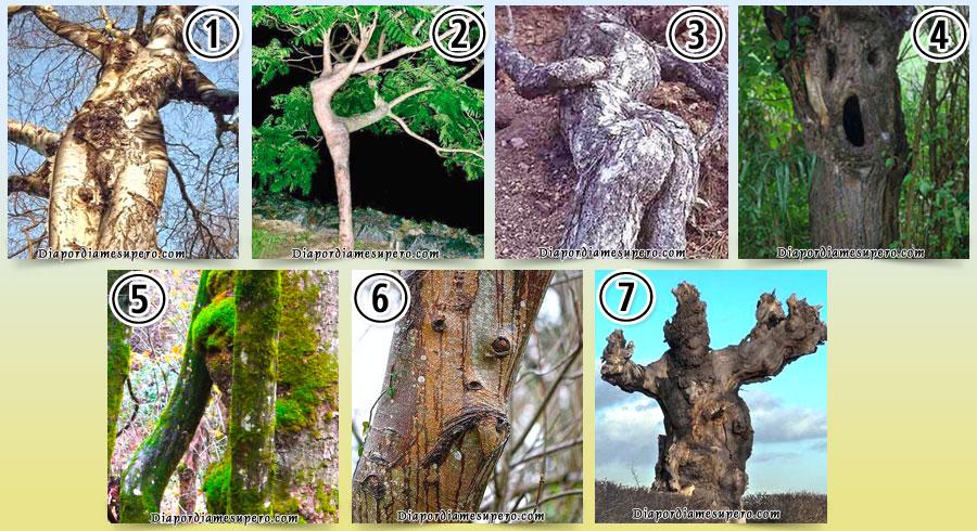Test: Elige el árbol que te parezca más humano