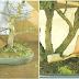 Pencegahan Dan Pengendalian Bonsai Dari Hama Dan Penyakit