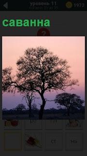 Степе подобное место саванна с одиноким деревом в вечернее время, когда наступили сумерки