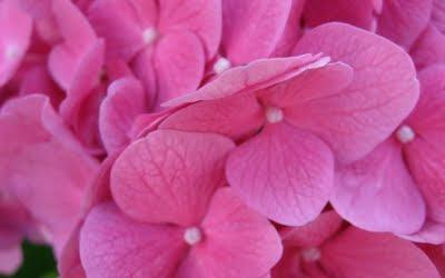 plantas-con-florecillas-de-color-rosa