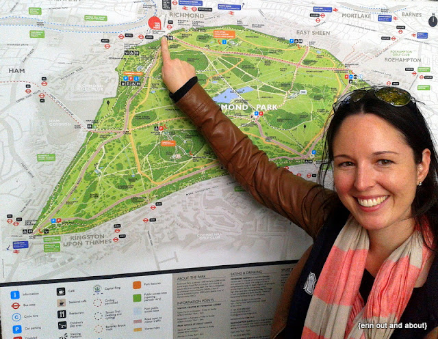 {Erin Out and About} Must do walk in London: Richmond Park
